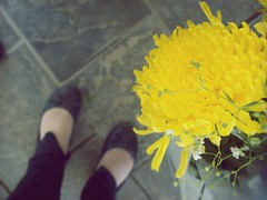 Yellow pretty life (Shakespeare.) Tags: flowers yellow shoes zapatos