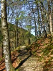 Spring feeling (haikus*) Tags: trees light sun green leaves forest way spring shadows path orton golddragon