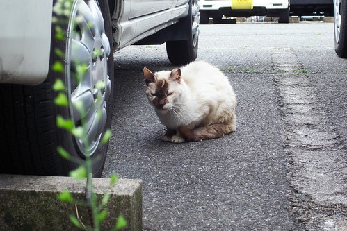 Today's Cat@20090415