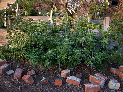 ONE PLANT DSCN0400