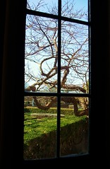 libert vo cercando (lunaz (la Lu)) Tags: light tree window lines dark curves finestra curve albero hamptoncourt luce lu buio linee rubyblue lunaz