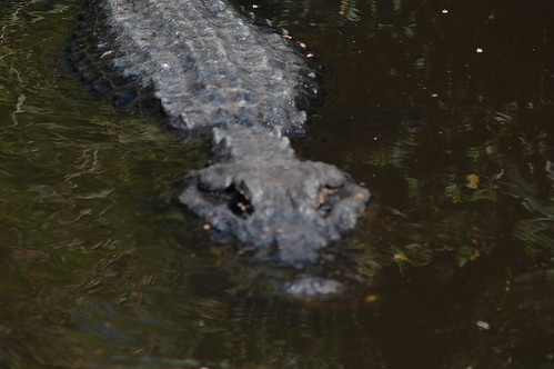 Water lurker