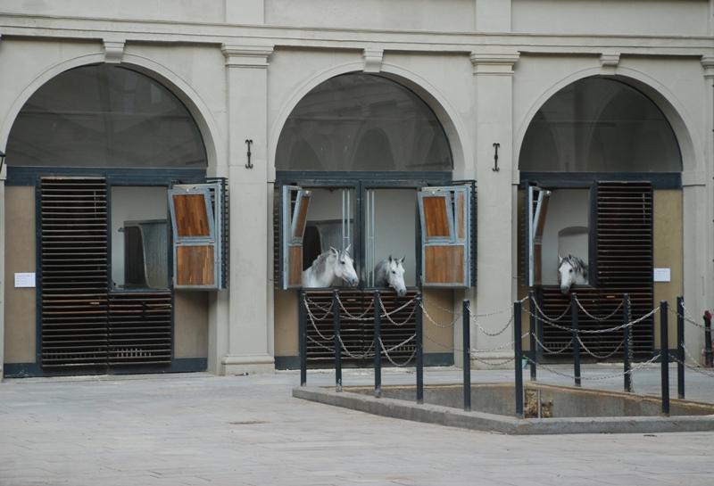 Wien 0648
