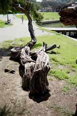 Img021 (Frabjous Joy) Tags: lakemerritt oaklandca lakesidepark