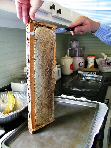 Scrapping the seal of the honey