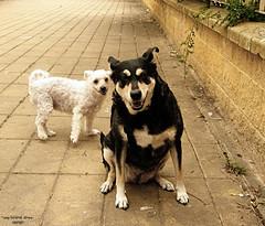 My Friends (Di Gutti (diegogutierrez79@gmail.com)) Tags: dog photo sevilla diego olympus can seville perro explore animales gettyimages chispi zacha sanjosdelarinconada diegogutierrez sevillan      olympussp560uz    sevillban