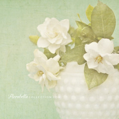 Gardenias in Milk Glass (Shana Rae {Florabella Collection}) Tags: life flowers glass milk still textures vase gardenias florabella shanarae florabellatextures
