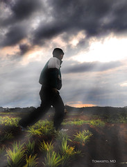 Walking In The Fields Of Light (Tomasito.!) Tags: man earth soil pineapple raysoflight tomasito fieldsoflight 18105mm nikond90 walkingperson