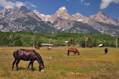 A Moment of Serenity (Jeff Clow) Tags: ranch horses mountains bravo serenity wyoming tetons grandtetonnationalpark 1exp jacksonholewyoming jeffrclow