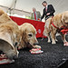 Three of the Terry's dogs feast upon cake during the Terry Center dedication.