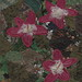 22 - June 3 - Pink Flowers