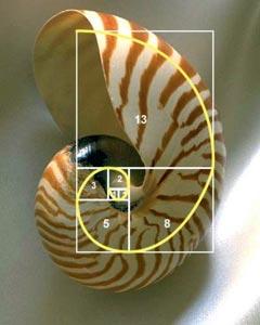 Algunas curiosidades sobre los números de Fibonacci