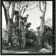 Hugo Curran collecting a specimen of Dracaena
