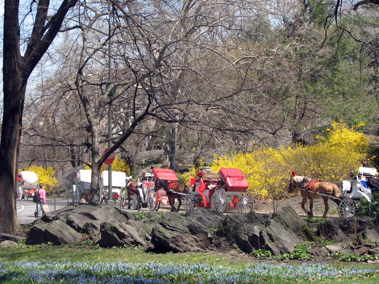04.16.09 Central Park (18)