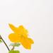 0904 flowers B #6