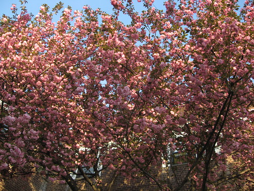 Pink Trees by you.
