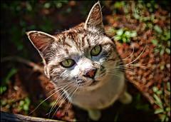 Rendezvous With Myuu (David Panevin) Tags: japan cat nose bokeh olympus whiskers neko e3 tochigi rendezvous utsunomiya noraneko myuu catsonthescene sigma1850mmf28exdcmacro hachimanyamapark mynewstrayfriend davidpanevin