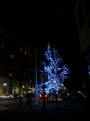 100_3559 (Mindsay Mohan) Tags: trees water lights waterfront front yonkers yonkersny pierview