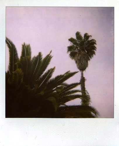 sunset blvd palm trees