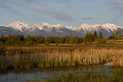 Golden Evening (BigSkyKatie) Tags: panorama mountains nature cat landscape pond montana heaven rocky peak cattails national mission bison range heavenly mothersday tails macdonald wetland riparian missionmountains moiese abigfave natureoutpost absolutelystunningscapes katielasallelowery