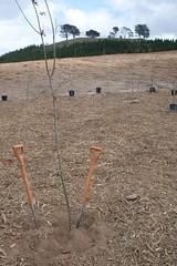 Arboretum Engineers plantings (spelio) Tags: friends forest know ceremony arboretum p