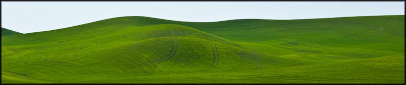Wheat_Lines.jpg