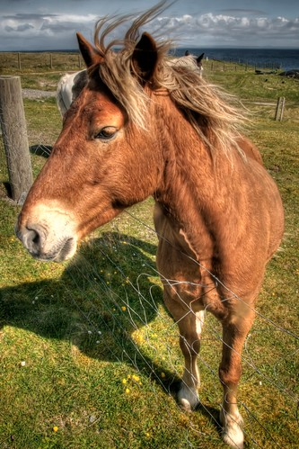 Inisheer Horse