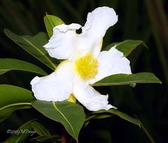 Flora_132 (Marcelo Piraj) Tags: macro flora flres pnchapadadiamantina