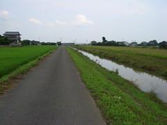 東大江川沿い