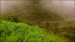 Misty Landscape at the Heritage Grove Redwood Preserve in La Honda, California (SCVHA) Tags: california commemorative lahonda heritagegrove redwoodpreserve