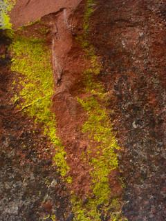 Green Mountain Moss 2