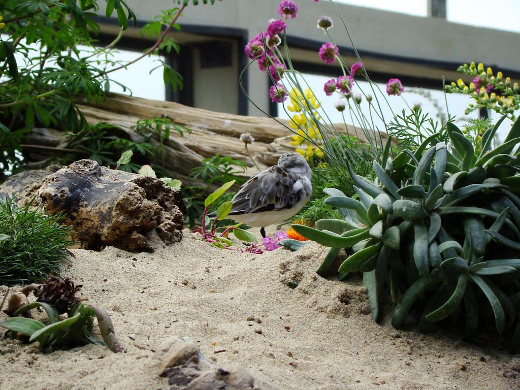 DSC01916 Monterey Bay Aquarium