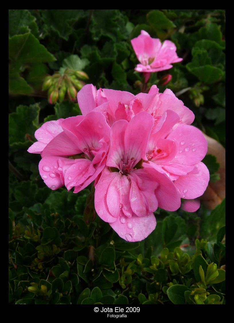 Flor y gotas