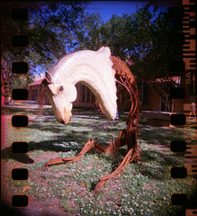 Giddy-Up (Lucy*Lou) Tags: lsu bbf blackbirdfly artquad behindhowerussell
