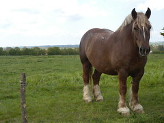 Cheval (girolame) Tags: horse cheval brittany