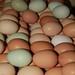 Multicolored Eggs
