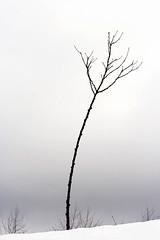Wintertime... (Giuseppe Torcasio) Tags: blackandwhite tree solo neve albero inverno montagna bianco nero calabria sud lameziaterme stagione meridione decollatura yourcountry giuseppetorcasio