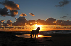 A golden memory (Ingrid0804) Tags: friends sunset sea sky beach clouds goldenretriever soe mywinners abigfave impressedbeauty aplusphoto citrit theperfectphotographer photoexplore explorewinnersoftheworld goldenheartaward 100commentgroup vosplusbellesphotos