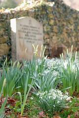 Old and New (Stu Meech) Tags: life new cemetry 50mm spring nikon bath stu somerset gravestone snowdrops f28 daffodils springtime meech d40
