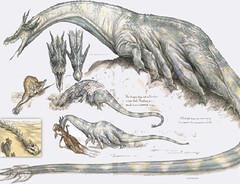 Giant krayt dragon sketches