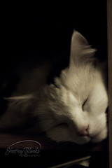 Sleepy Girl (KaTrina Blanks) Tags: portrait pet cats cute animal animals cat nc furry kitten chat fuzzy sleep kitty northcarolina kittens sleepy gato cuddly furryfriday gatto ritratto gatti animale kedi portre chaton petportrait gattino poils hayvan carino irin gattini sevimli peloso kediler animaledomestico bulank pisipisi yavrukedi affettuoso evcilhayvan tyl camoments venerdpeloso momentidigatto ritrattodacompagnia tylcuma kedianlar hayvanportre