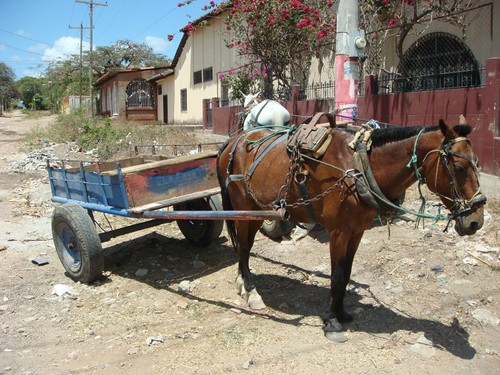 Can´t get enough of the horse carts...