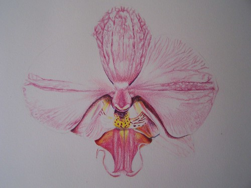 orchid colored pencil 5