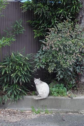 Today's Cat@20090326