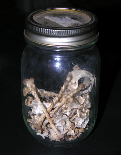 BONELUST - Found Opossum Bones in Jar