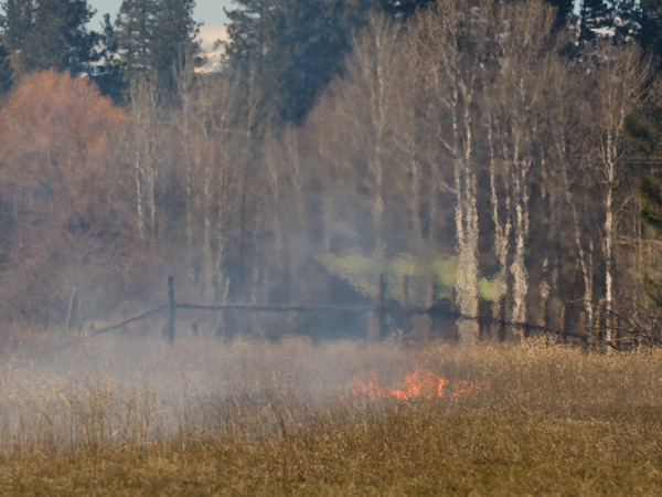 neighbors burning weeds