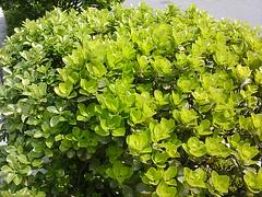 가장 좋아하는 녹색♥ (redsoul405) Tags: oneshot me2day me2photo me2mms