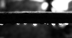 gocce milanesi (Buldrock) Tags: bw canon eos milano pioggia brightness tubo biancoenero lightroom blackandwite goccie 450d brillantezza