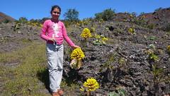 Aeonium 2 (Mataparda) Tags: islands abril canarias april canary 2009 islas aeonium hierro elhierro verode