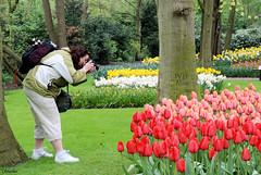 Meet-up (chris_cine) Tags: flower netherlands flickr nederland tulip paysbas meet olanda keukenhof roze bloem tulp lisse